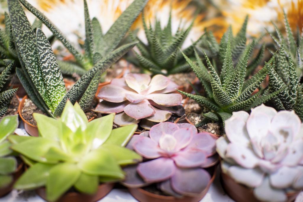 Plantas y complementos