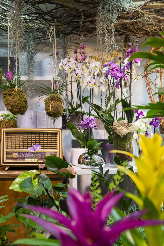 Plantas y complementos 2