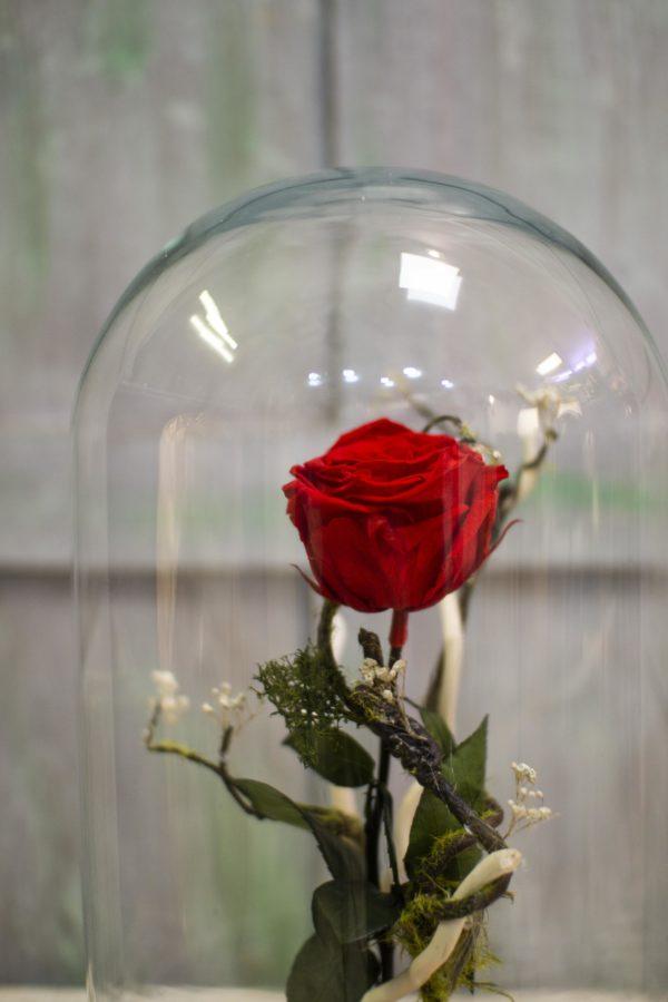 rs Cúpula con rosa preservada 2