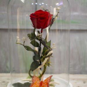 rs Cúpula con rosa preservada 3