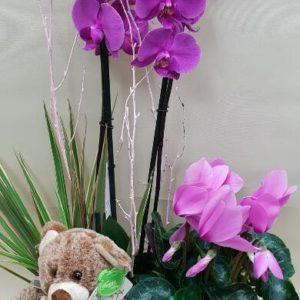 rs Centro de plantas con peluche 4