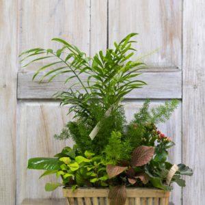 rs Cesta plantas 1