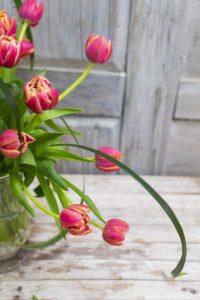 rs Jarrón tulipanes 1.3