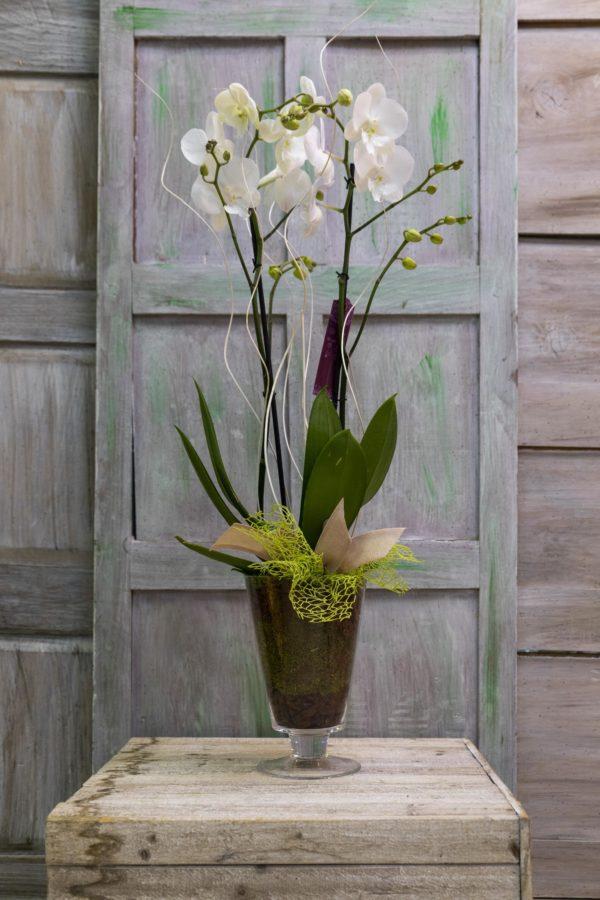 rs Orquídea en cristal